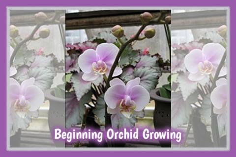 Beginning Orchid Growing at Lyman Estate Greenhouses