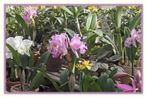Lyman Estate Greenhouses Spring Orchid Sale