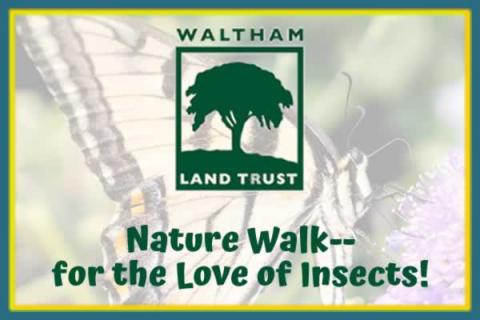 Waltham Land Trust: Nature Walk--for the Love of Insects!