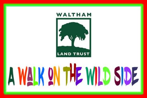 Take A Walk on the Wild Side with Waltham Land Trust